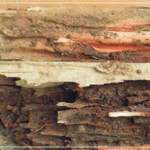 Termite control Termite damaged wood looks like this.