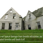 Cost of Termite Damage Repair