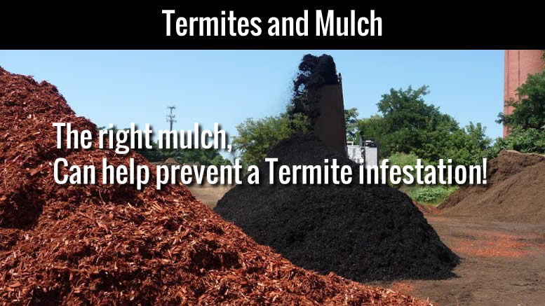 4 Things You Need To Know About Termites And Mulch